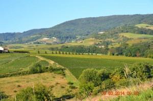 Vauxrenard - Beaujolais - Rhone - Un paysage de Vauxrenard